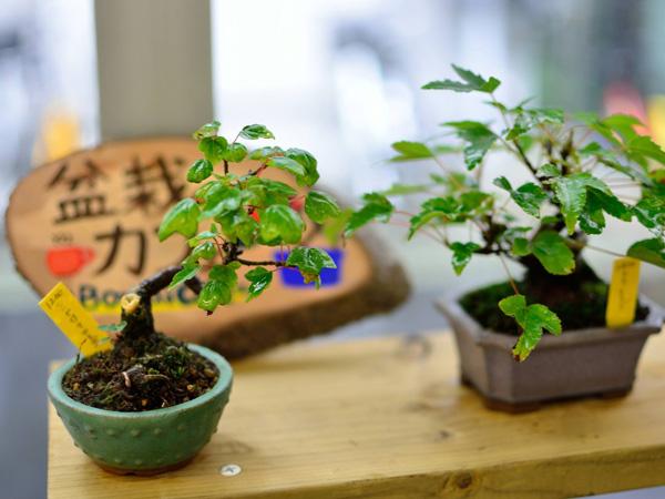 盆栽カフェS